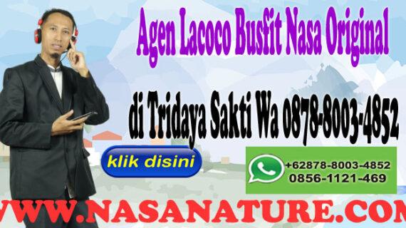 Agen Lacoco Busfit Nasa Original di Tridaya Sakti Wa 0878-8003-4852