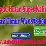 Agen Madu Hutan Super Kalimantan di Bekasi Timur Hub Wa 0878-8003-4852