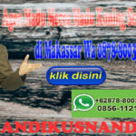 Agen Madu Mecca Madu Kuning Sehat Lambung di Makassar WA 0878-8003-4852
